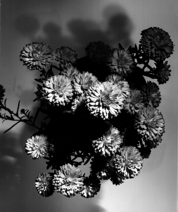 flowers pictures black and white. he takes lack and white